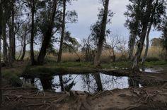 Delta del Ebro. Ullal de Baltasar. Delta Del Ebro, Country Roads, Orange Blossom, Orange, Sevilla, Roses, Beach