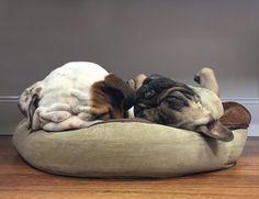 Bulldog (inglés) vs Bulldog (francés): los (fabulosos) retratos perrunos de Serena Hodson | SrPerro.com, la guía para animales urbanos.