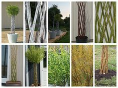 Willows: Living Willow Weaving - Workshop