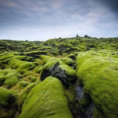 "Instagram media by ink361 - ""The moss covered lava fields of Southern Iceland extend for miles off the coast. The color of the moss is a direct influence on the amount of rain fall and moisture at the time. I shot this in the winter of 2013 during a very wet winter. The cobra de if the moss fields is an attack on the senses and an incredibly peaceful experience."" . Photo by @ladzinski."