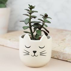 Are you interested in our Indoor Plant Pots? With our Set of 2 Cat's Whiskers Mini Planters you need look no further. Small Potted Plants, Indoor Plant Pots, Air Plants, Face Planters, Ceramic Planters, Garden Planters, Painted Flower Pots, Painted Pots, Plastic Bottle Crafts