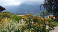 Free mixed planting of perennials.  Design and execution Grünkultur Luther, Meran. www.luther.it