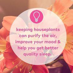#Flower power #lifehacks #snooze #zzz #sleepy #home #homehacks #interiordesign #natural