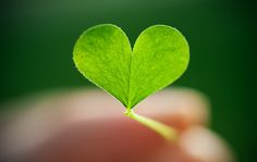 Green Heart At Work: Green Quotes Heart In Nature, Heart Art, I Love Heart, Key To My Heart, Crazy Heart, Green Quotes, In Natura, Heart Pictures, Tumblr