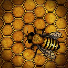 The Honey Bee by a.d.miller, via Flickr