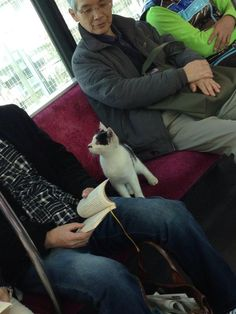 The cat in the train