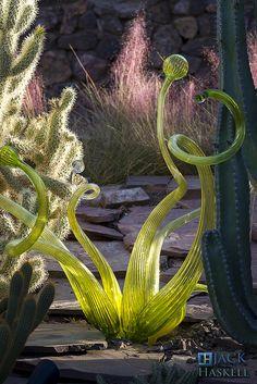 Sunset Lighting | Flickr - Photo Sharing Chihuly at Desert Botanical Garden in Phoenix