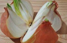 Conoce los beneficios que la cebolla aporta a tu salud