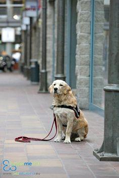 Psia Edukacja w Galerii Sfera