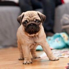 ¿Qué tipos de #perros podemos tener cuando no disponemos de mucho espacio?