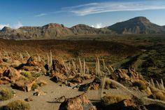 Discover Tenerife, Popular Travel Destinations in the Canary Islands, Spain Spanish Islands, Teneriffe, Canary Islands, Atlantic Ocean, Archipelago, Travel Destinations, Vineyard, Tourism, Coast