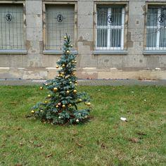 Der letzte Weihnachtsbaum in Berlin steht noch ...