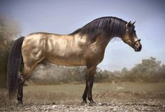 Basic Tips and Suggestions to Help You While Training Horses Horses And Dogs, Show Horses, Animals And Pets, All The Pretty Horses, Beautiful Horses, Animals Beautiful, Beautiful Creatures, Andalusian Horse, Buckskin Horses