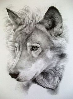 Jonny Lancaster Pencil Art | Pencil Portraits | Pet Portraits | Pet Artist | People Portraits | Commissions | Wall Art