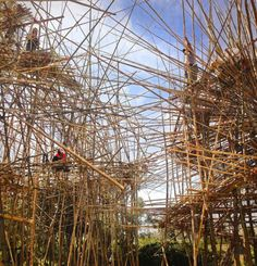 starn brothers build-up monumental big bambu installation in jerusalem Giant Bamboo, Bamboo Art, Tree Structure, Bamboo Structure, Bamboo Architecture, Architecture Details, Land Art, Famous Sculptures, Israel