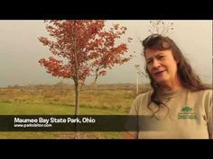 Get tips straight from a park ranger at Maumee Bay State Park, Ohio! @Visit Lorain County