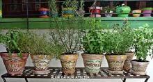 Pequenos detalhes grandes diferenças: Dicas fáceis para manter uma horta em apartamentos, casas e pequenos ambientes