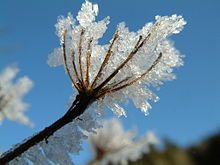 """Froste, även kallad Jökul (""""isfält"""") var far till Snö, den gamle."""