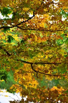 New print available on lanjee-chee.artistwebsites.com! - 'Autumn With Colorful Foliage 10' by Lanjee Chee - http://lanjee-chee.artistwebsites.com/featured/autumn-with-colorful-foliage-10-lanjee-chee.html
