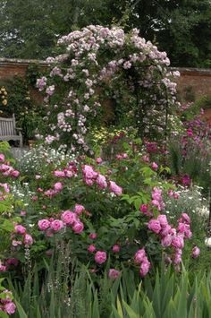 """Rosa """"Coup d'Hebe"""" in the foreground and """"Laure Davoust"""" on the rose arch at Mottisfont Abbey Garden, Hampshire"""