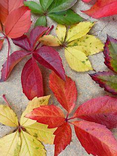 image fond ecran automne fond d 39 cran paysage cygnes d 39 automne chiens pinterest. Black Bedroom Furniture Sets. Home Design Ideas