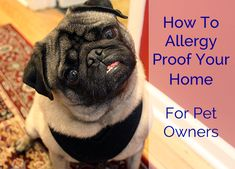 How To Allergy Proof Your Home For Pet Owners