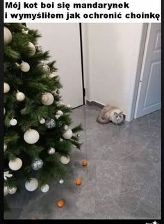 My cat is afraid of tangerines, so I created a force field to protect the Christmas tree - iFunny :) Funny Quotes, Funny Memes, Hilarious, Smile Quotes, Happy Quotes, Christmas Quotes, Christmas Tree, Christmas Ideas, Funny Cats
