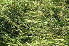 Herbs, Lawn, Herb, Medicinal Plants
