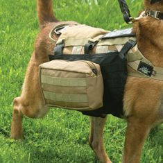 Hiking gear for your companion