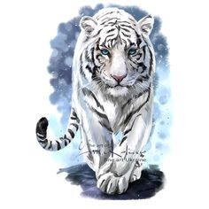 White Tiger by Kajenna on DeviantArt Tiger Sketch, Tiger Drawing, Tiger Artwork, Tiger Painting, Tiger Illustration, Animal Paintings, Animal Drawings, Art Drawings, Tiger Spirit Animal