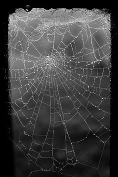 Spider web in black and white surroundings windowpane. Spider Art, Spider Webs, Itsy Bitsy Spider, In Natura, Black And White Pictures, Black White, Beveled Glass, Macro Photography, Black And White Photography
