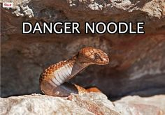 Danger Noodle. Do not touch.