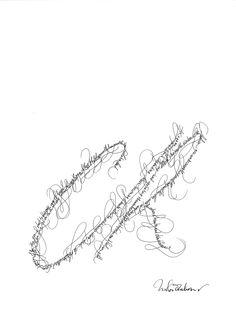 Parisian calligrapher Nicolas Ouchenir draws CR