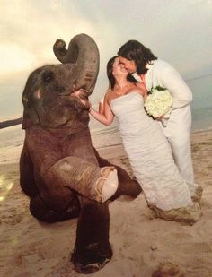 In Thailand it is tradition to have an elephant at your #wedding! Here is evidence with Safari Ltd® President Alexandre Pariente and Sales Manager Christina - #justmarried last month!