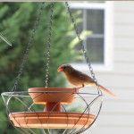 DIY Wild Bird Hanging Planter