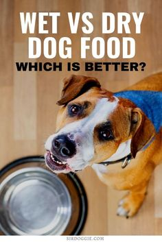 Wet Dog Food Versus Dry Dog Food, Find Out Which is Better? I dog care I wet food for dogs I food for dogs I pet dogs I dog care tips I tips for dogs I dog food I what to feed dogs I dry dog food I how to care for dogs I should you feed your dog dry food I pet care I pet tips I should you feed your dog wet food I dog food nutrition I #dogs #dogfood #pets
