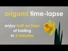Origami Time-Lapse: Daffodil / Narcissus (Assia Brill) - YouTube