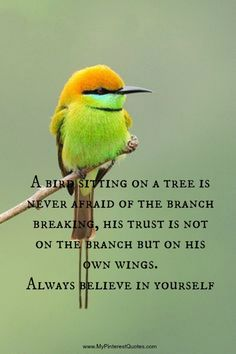 Bird on a branch quote.  Not sure by who.