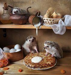 #delicous #hedgehog