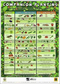 Urban Gardening Ideas Companion Planting Poster - Good info at the bottom on flowers and herbs that benefit food plants. - Beginners Companion Planting Resources for Gardening ~ Free Printable Companion Planting Chart What grows well together Veg Garden, Lawn And Garden, Veggie Gardens, Edible Garden, Spring Garden, Raised Vegetable Gardens, Vegetables Garden, Vegetable Garden Layouts, Fruit Garden