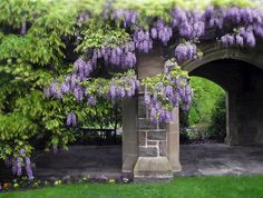 Hanging Wisteria Photograph by Jessica Jenney - Hanging Wisteria Fine Art Prints and Posters for Sale