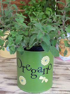 Simply Healthy Family: Recycled Indoor Herb Garden using formula cans