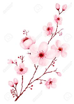 Picture of Watercolor cherry blossom branches hand painted. Spring or summer decoration sakura design, illustration isolated on white background. stock photo, images and stock photography. Cherry Blossom Drawing, Cherry Blossom Watercolor, Watercolor Flowers, Watercolor Paintings, Cherry Blossom Vector, Watercolor Tattoos, Watercolor Portraits, Watercolor Landscape, Abstract Watercolor