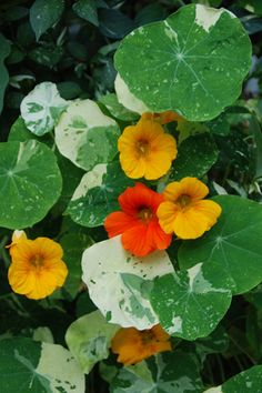Edible Flowers Pluck a few flower petals and add flavor and color to your favorite salad, beverage, or jelly.