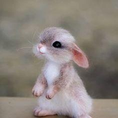 Log in - rabbit pictures . Cute Animals Images, Cute Wild Animals, Baby Animals Super Cute, Cute Baby Bunnies, Baby Animals Pictures, Cute Animal Photos, Cute Stuffed Animals, Cute Animal Drawings, Cute Little Animals