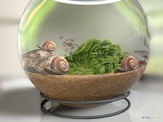 Cómo cuidar caracoles