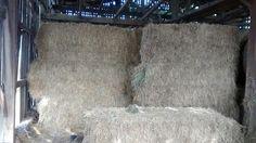 White House Farms: Premium Ky Horse Hay