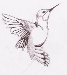 Image detail for -Humming Bird Sketch by ~chibikitty343 on deviantART