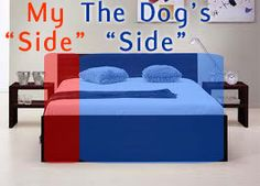 Bed dog or bed hog: the realities of sleeping with dogs