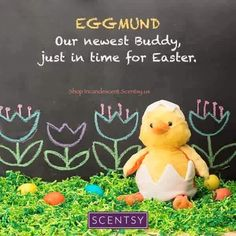EGGMUND THE CHICK, SCENTSY BUDDY  ~ AVAILABLE FEBRUARY 1, 2016